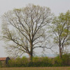 20110408_MKittrell_005978