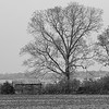 20110408_MKittrell_005984
