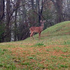 20130323_MKittrell_001633