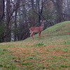 20130323_MKittrell_001704
