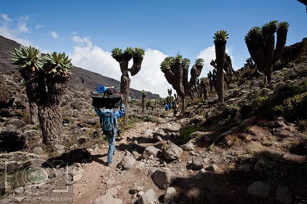 Mt Kilimanjaro | The Big Daddy  | Tanzania _MG_9858