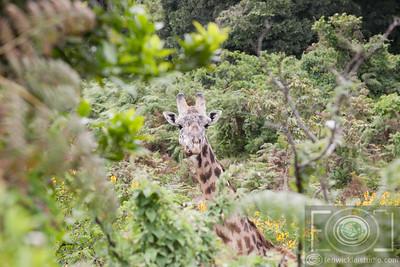 MT Meru | Arusha NP
