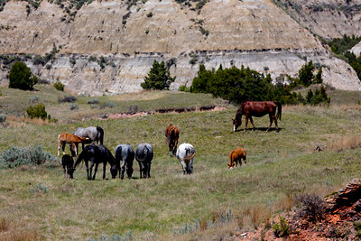 Wild Horses - Theodore Roosevelt National Park - ND-8890
