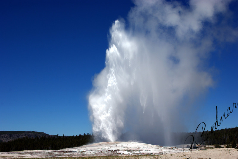 Photo By Bob Bodnar.......................................Old Faithful Geyser,  Yellowstone National Park