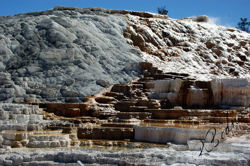 Photo By Bob Bodnar,,,,,,,,,,,,,,,,,,,,,,,,,,,,,,,,,,,Mammoth Hot Springs, Yellowstone National Park