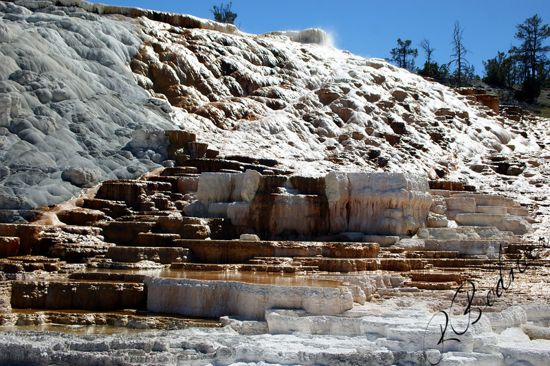 Photo By Bob Bodnar.........................................Mammoth Hot Springs, Yellow National Park