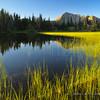 Sapphire Lake Grasses