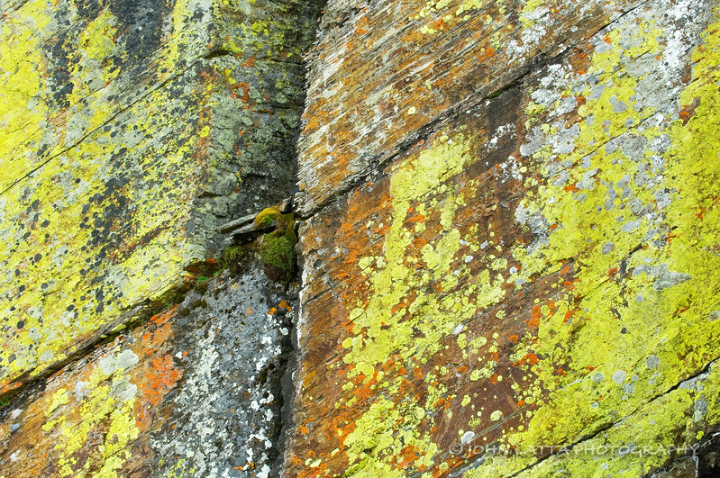 Colorful Lichen on Cliff