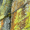 Colorful Lichen on Cliff