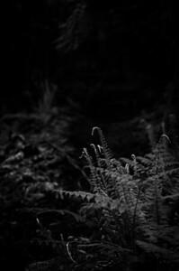 © ben groenhout