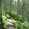 Gotta love the aspens.  This is on the Flying Dog Loop.