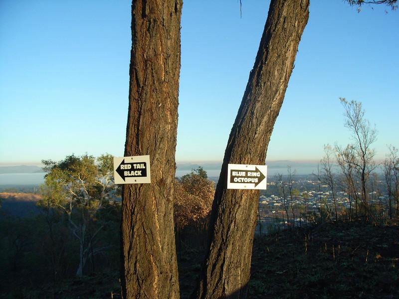 Ironbark Trail Hub, looking through the trees the hub is named after, towards Hervey Range