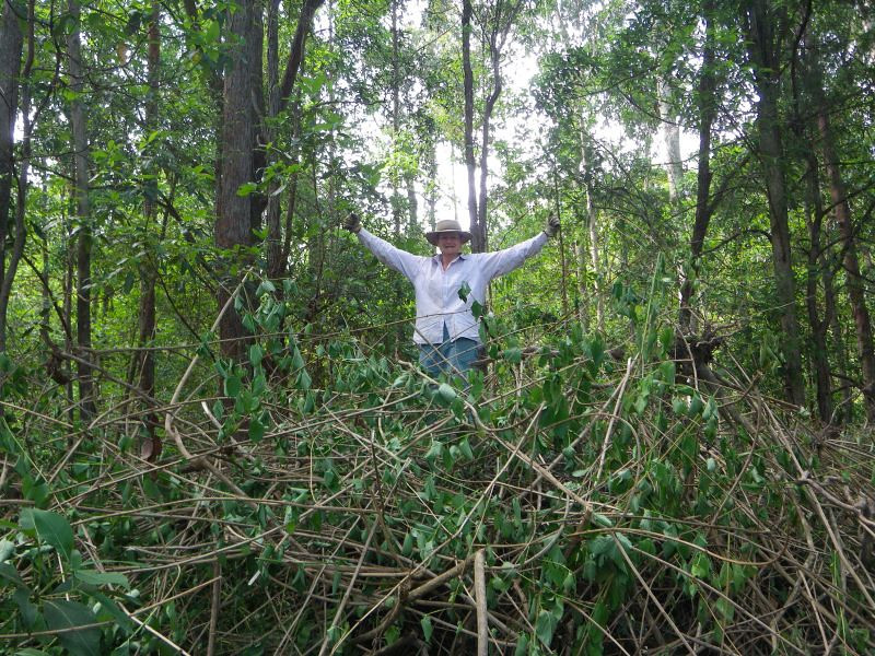 Toni on top of a cleared patch of Lantana