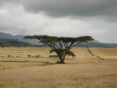 130917 Brackenhurst & Rift Valley Odyssey
