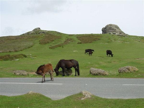 12  Dartmoor - bekend om zijn tors en horses
