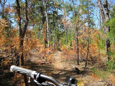 Batsto Trails