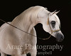 MT. Pleasant Stallion Station : 63 galleries with 1422 photos