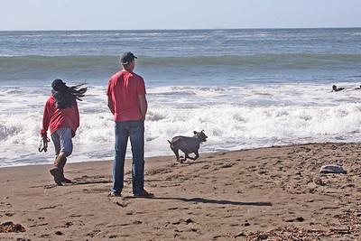 MUIR BEACH DOGS 0070