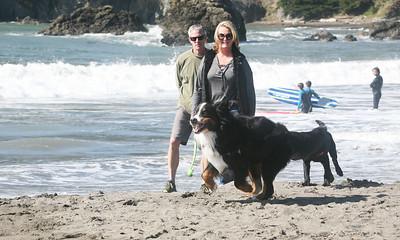 MUIR BEACH DOGS 0041