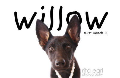 HSwillow - 1