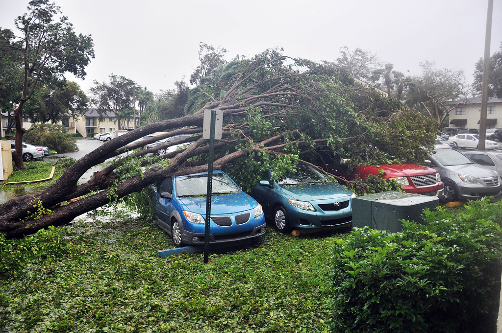 . A fallen tree crashes atop a row of cars on September 10, 2017 Miami, Florida in the wake of Hurricane Irma.   Hurricane Irma\'s eyewall slammed into the lower Florida Keys, lashing the island chain with fearsome wind gusts, the US National Hurricane Center said. / AFP PHOTO / Michele Eve SANDBERG        (Photo credit should read MICHELE EVE SANDBERG/AFP/Getty Images)