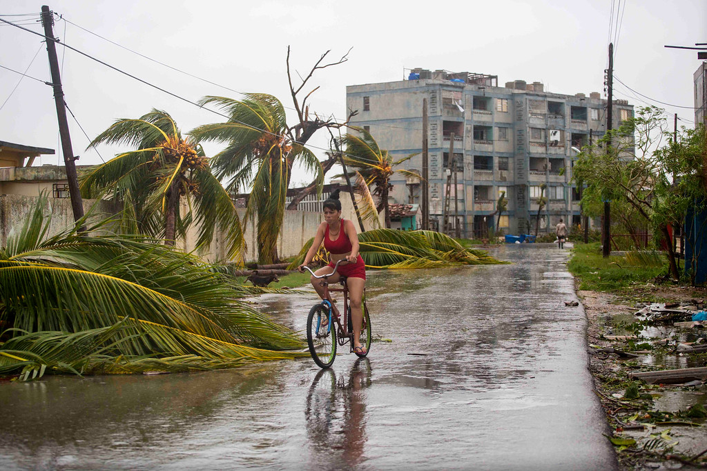 . A woman rides a bike past palm trees felled by Hurricane Irma, in Caibarien, Cuba, Saturday, Sept. 9, 2017. There were no reports of deaths or injuries after heavy rain and winds from Irma lashed northeastern Cuba. Seawater surged three blocks inland in Caibarien. (AP Photo/Desmond Boylan)
