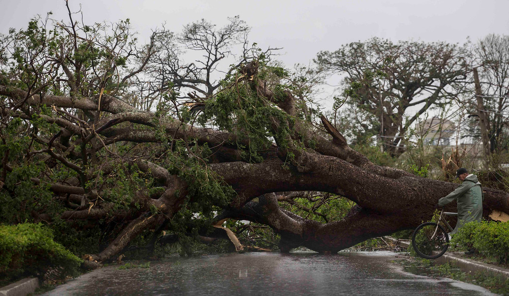 . A tree felled by Hurricane Irma blocks a road in Caibarien, Cuba, Saturday, Sept. 9, 2017. There were no reports of deaths or injuries after heavy rain and winds from Irma lashed northeastern Cuba. Seawater surged three blocks inland in Caibarien. (AP Photo/Desmond Boylan)