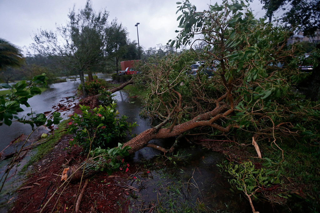 . Fallen trees are seen during Hurricane Irma, in Fort Myers, Fla., Sunday, Sept. 10, 2017. Hurricane Irma set all sorts of records for brute strength before crashing into Florida, flattening islands in the Caribbean and swamping the Florida Keys. (AP Photo/Gerald Herbert)
