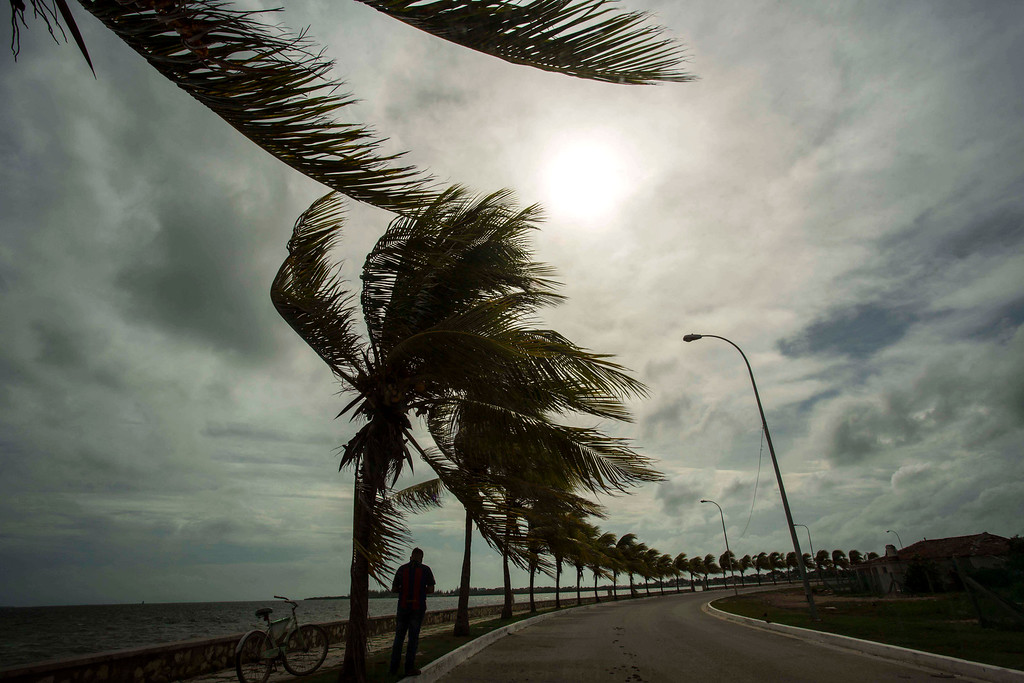 . Winds brought by Hurricane Irma blow palm trees lining the seawall in Caibarien, Cuba, Friday, Sept. 8, 2017. Cuba evacuated tourists from beachside resorts after Hurricane Irma left thousands homeless on a devastated string of Caribbean islands and spun toward Florida for what could be a catastrophic blow this weekend. (AP Photo/Desmond Boylan)