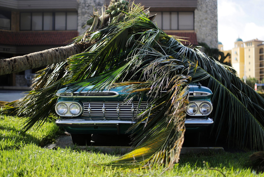 . A Chevrolet Bel Air classic car sits under a fallen palm tree from Hurricane Irma in Marco Island, Fla., Monday, Sept. 11, 2017. (AP Photo/David Goldman)