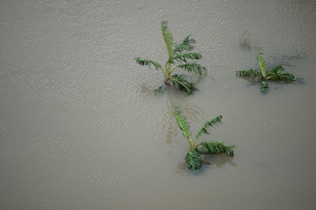 . A plantain field stands under water after the passing of Hurricane Maria in Yabucoa, Puerto Rico, Thursday, September 21, 2017. As of Thursday evening, Maria was moving off the northern coast of the Dominican Republic with winds of 120 mph (195 kph). The storm was expected to approach the Turks and Caicos Islands and the Bahamas late Thursday and early Friday. (AP Photo/Carlos Giusti)