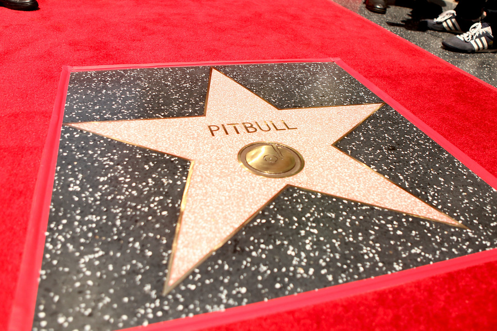 . HOLLYWOOD, CA - JULY 15:  A general view of atmosphere as Pitbull is honored with a Star on The Hollywood Walk of Fame on July 15, 2016 in Hollywood, California.  (Photo by Matt Winkelmeyer/Getty Images)