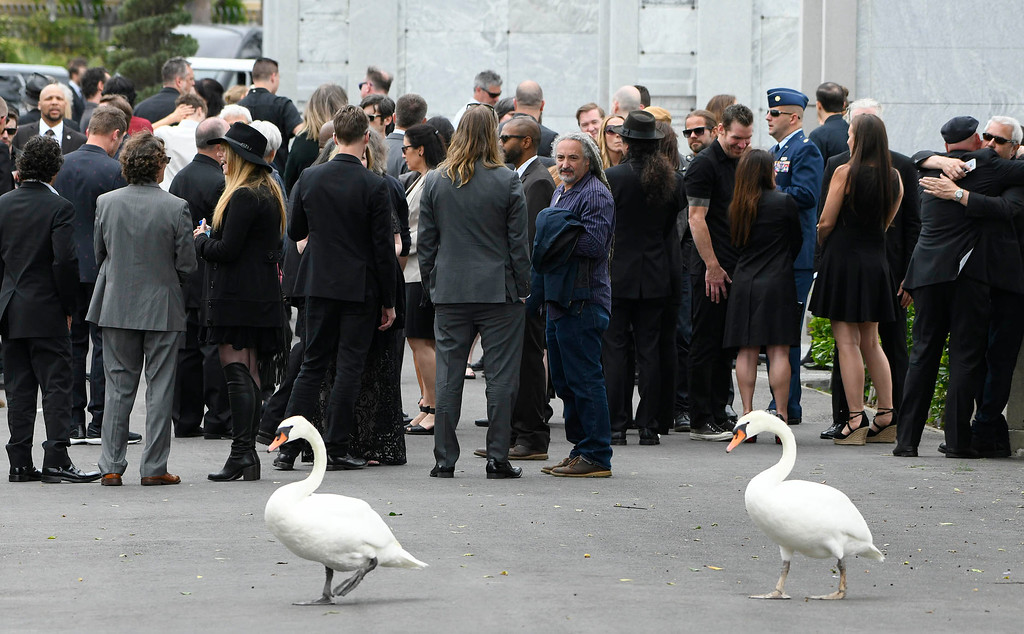 . Swans walk past people after they attended a memorial service at Hollywood Forever Cemetary for Chris Cornell, the iconic rocker who hanged himself in a Detroit hotel room earlier this month. Los Angeles, CA. 5/26/2017 Photo by John McCoy/Los Angeles Daily News (SCNG)