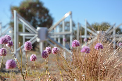Dipole and Wildflowers