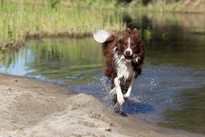 River Dogs 2012