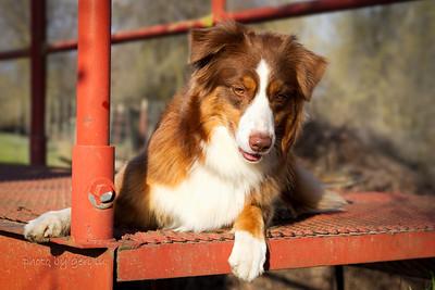 Sunny at Kaweah Oaks Preserve ~ Feb 10, 2013