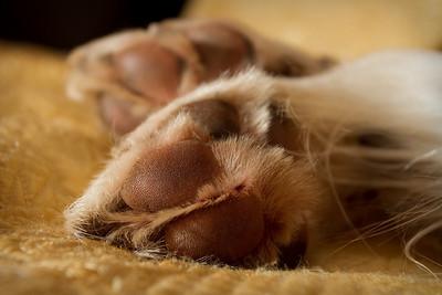 December 9.  Flint Feet.