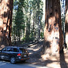MY RENTAL CAR PROVIDES PROSPECTIVE. SEQUOIA NP.