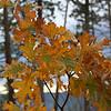 Fall foliage in Yosemite