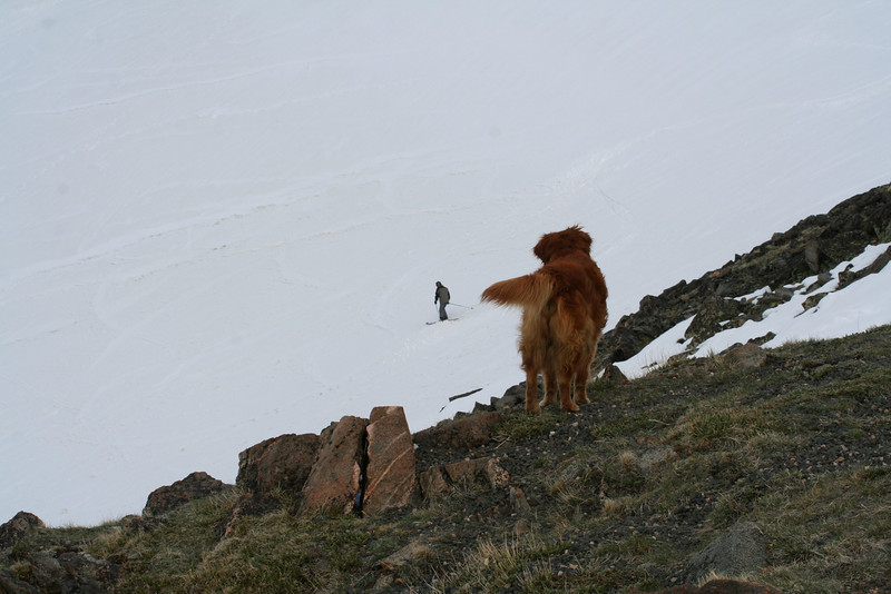 A DOG WATCHES HIS BUD SKI IN THE BEARTOOTH MOUNTAINS IN MONTANA.