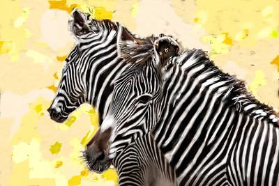 my zebra 16x24 final