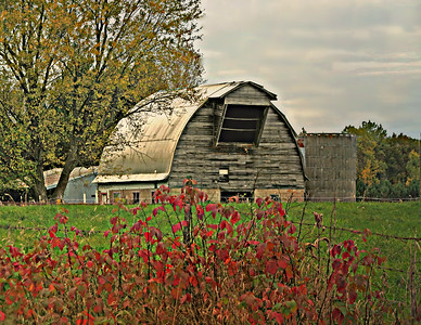 UNIQUE BARN WITH RED LEAVES IN FRONT