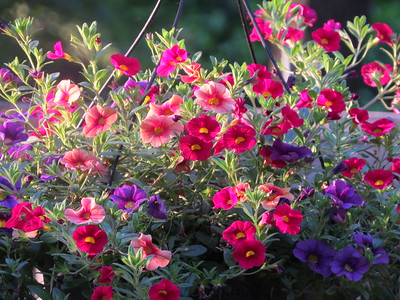A HANGING BASKET OF FLOWERS