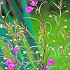 cmtinypurpleflowersfinal (2)