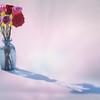 flowersinsnowfft