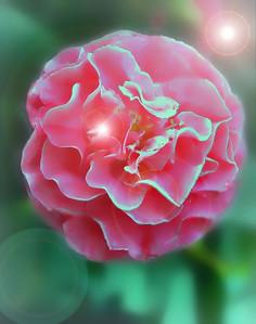 pinkflowerftopm_edited-1