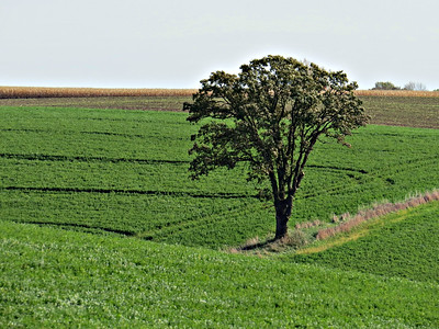 FIELDART TREE