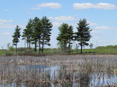Wetland Saga