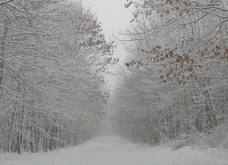 A WINTER'S DRIVE THROUGH