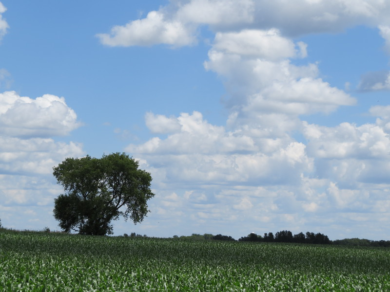 CLOUDS OVER SINGLE TREE